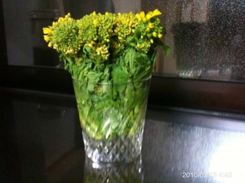 ちょっと咲き始めた菜の花